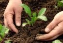 Лунный посевной календарь на апрель 2016 для садовода и огородника