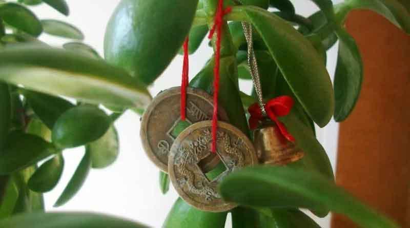 Денежное дерево для привлечения богатства