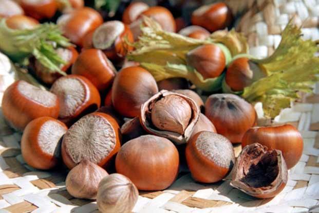 Ореховый, или Хлебный, Спас в этом году: какого числа, приметы